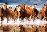 Horses Galloping Photograph Poster Plakater