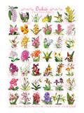 Orchidées Poster