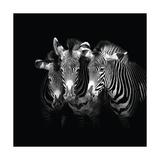 Shades of Grevy Giclée-Druck von Marina Cano