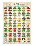 Herbs & Spices Kunstdrucke