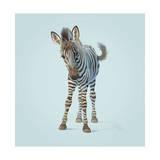 Zebra Giclée-tryk af John Butler Art