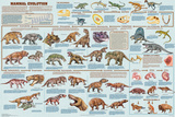 Mammal Evolution Pôsters