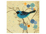 Hooded Oriole Blue Affiches