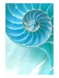 オウムガイの貝殻 アート