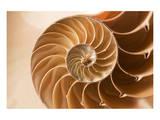 Fibonacci Pattern in a Shell Print