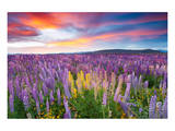 Sunset Is In The Flower Field Prints