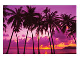 Palm Trees Silhouette Thailand Plakater