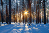 Winter Landscape Photographic Print by  Yanika