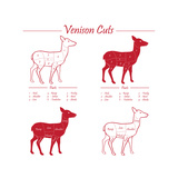 Venison Meat Cut Diagram Scheme Posters by  ONiONAstudio