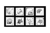 Sea Shells Beach Arte por Megan Aroon Duncanson