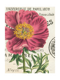 Peony Botany Prints by Sue Schlabach
