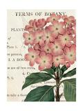 Bicolor Phlox Botany Posters by Sue Schlabach