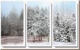 Frosty Morning Stretched Canvas Print by Mike Jones