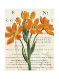 Euphorbia Botany Art by Sue Schlabach