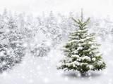 Fir Tree in Thick Snow Lámina fotográfica por  Smileus