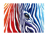 Abstract Pop Zebra Prints by Megan Aroon Duncanson