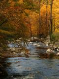 Golden foliage reflected in mountain creek, Smoky Mountain National Park, Tennessee, USA Fotografie-Druck von Anna Miller