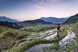 Vietnam, Sapa. Red Dao Woman on Rice Paddies at Sunrise (Mr) Photographic Print by Matteo Colombo