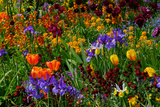 A Riot of Colorful Tulips, Irises and Other Flowers in Monet's Garden in Giverny Fotografisk trykk av Paul Damien
