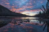 A Grizzly Bear, Ursus Arctos, Hunting Salmon in a River at Sunset Lámina fotográfica por Peter Mather