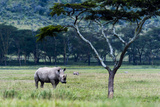 A Solitary White Rhinocerous Grazing on the Short Grasses of the Savannah Plain Fotografie-Druck von Jason Edwards