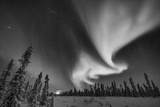 The Northern Lights, or Aurora Borealis, over a Boreal Forest Photographic Print by Peter Mather
