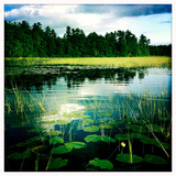 Lily Pads and Grasses in a Fresh Water Marsh Off Sebago Lake Reproduction photographique par Skip Brown