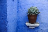 A Potted Plant on a Blue Painted Wall in the Monasterio De Santa Catalina Complex Reproduction photographique par Beth Wald