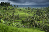 The Jatiluwih Rice Terraces Fotografisk trykk av Jim Richardson