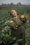 A Cabbage Farmer on Her Farm Fotografisk trykk av Jim Richardson