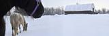 Horses in a Pasture in Winter Valokuvavedos tekijänä Raul Touzon