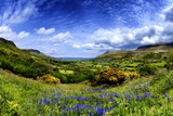 Bluebells in the Glens of Antrim, Northern Ireland Fotografisk tryk af Chris Hill