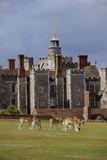 The Knole House Deer Park from the Era of King James Fotografisk trykk av Jim Richardson