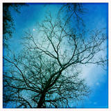The Moon Behind a Bare Sycamore Tree Reproduction photographique par Skip Brown