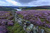Heather Covered Bamford Moor Photographic Print by Eleanor Scriven