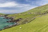 Sheep Fences and Rock Walls Along the Dingle Peninsula Premium fotoprint van Michael Nolan