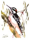 Woodpecker On Tree Posters par Suren Nersisyan