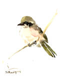 Loggerhead Shrike 2 Affiches par Suren Nersisyan