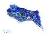 Squid Prints by Suren Nersisyan