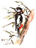 Woodpecker 2 Poster par Suren Nersisyan