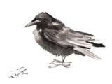 Crow 6 Affiches par Suren Nersisyan