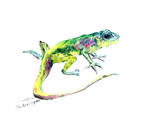 Lizard 3 Posters af Suren Nersisyan