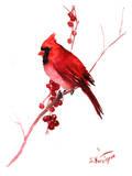 Red Cardinal Bird Art par Suren Nersisyan