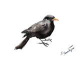 Blackbird 2 Affiches par Suren Nersisyan