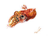 Squid 2 Kunstdrucke von Suren Nersisyan