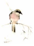 Loggerhead Shrike Posters par Suren Nersisyan