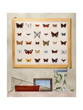 The Butterfly Collector, 2012-13 Giclée-tryk af Rebecca Campbell