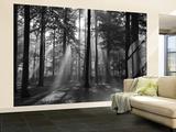 Forest in the Morning Wallpaper Mural Papier peint