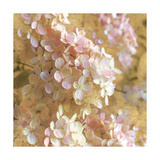 Gilded Hydrangea I Posters by Sue Schlabach