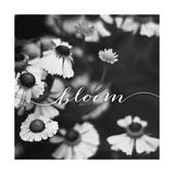 Flor Lámina por Laura Marshall